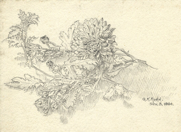 A.K. Rudd, Chrysanthemum Study - Original 1894 graphite drawing