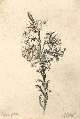 A.C.H. Luxmoore, Lilies - 19th-century etching print