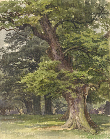 Frederick George Reynolds, Richmond Park - 19th-century watercolour painting