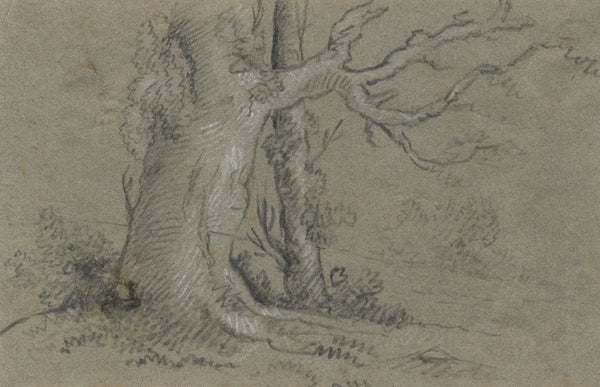 Alexander Dyce, Woodland Tree - Original 1810 graphite drawing