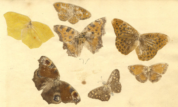 Alexander Dyce, Butterfly Studies - Original 1810 graphite drawing