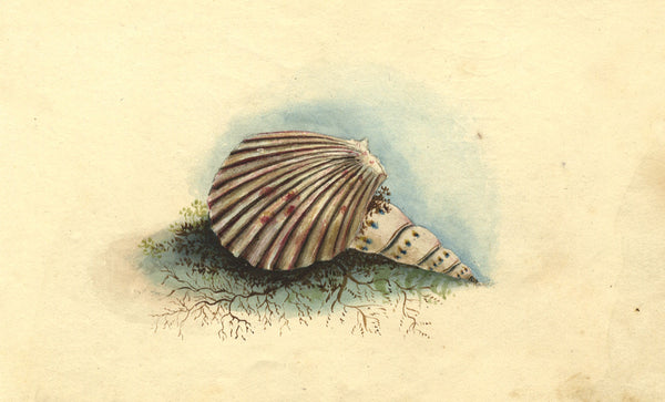 Alexander Dyce, Sea Shells Still Life - Original 1810 watercolour painting