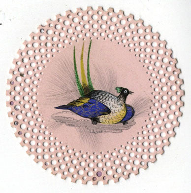 Miniature Peacock Bird - 19th-century watercolour on Victorian Perforated Paper