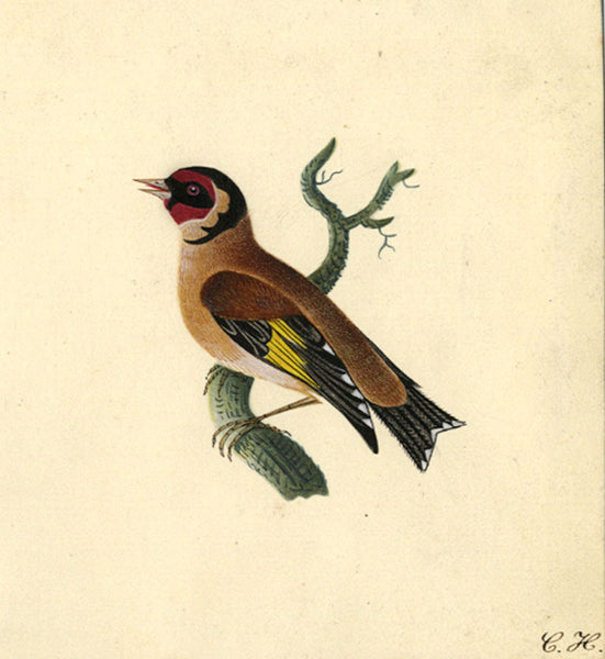 C.H., Goldfinch Bird - Original 19th-century watercolour painting