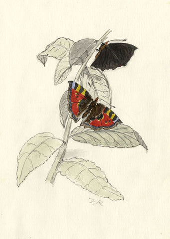 F.R., Small Tortoiseshell Butterfly - Original 19th-century watercolour painting