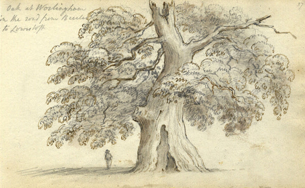 Circle of John Varley, Oak, Worlingham, Suffolk - Early 19th-century ink drawing