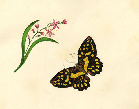 Black & Yellow Butterfly with Flowers - Early 19th-century watercolour painting