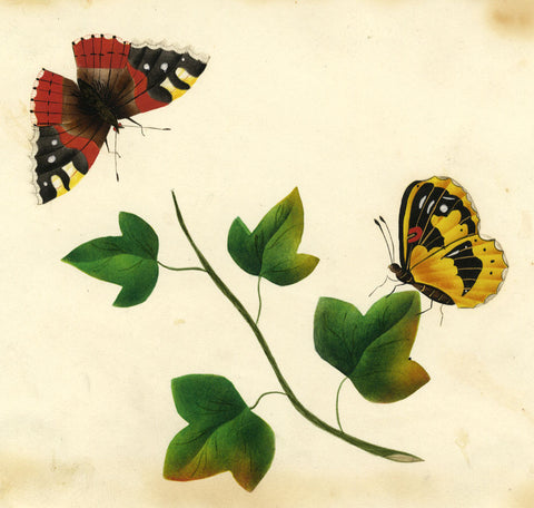 Butterflies with Ivy Leaves - Original early 19th-century watercolour painting