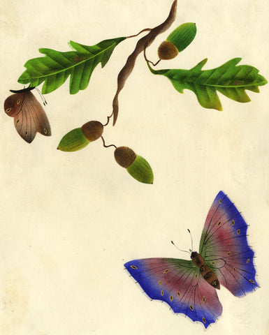 Blue Butterfly with Acorns & Oak Leaves -Early 19th-century watercolour painting