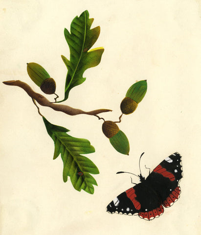 Red Admiral Butterfly with Oak & Acorns -Early 19th-century watercolour painting