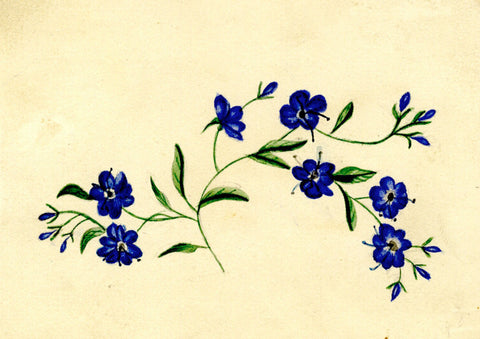 Forget-me-not Flowers - Original mid-19th-century watercolour painting