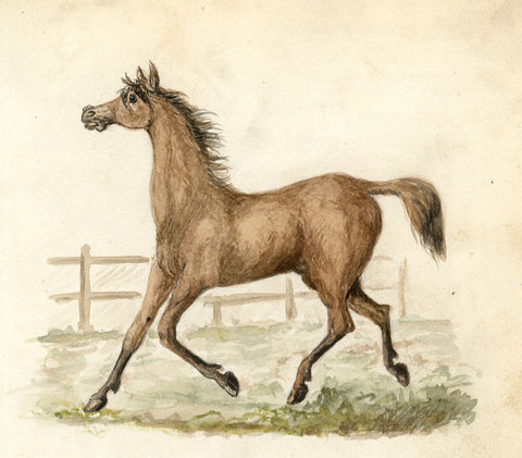 Galloping Horse - Original late 19th-century watercolour painting