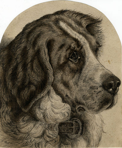 Landseer Newfoundland Dog Portrait -Original late 19th-century pen & ink drawing