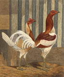 C.W.P. Clapham, Pair of Rooster Birds - Original 1877 watercolour painting
