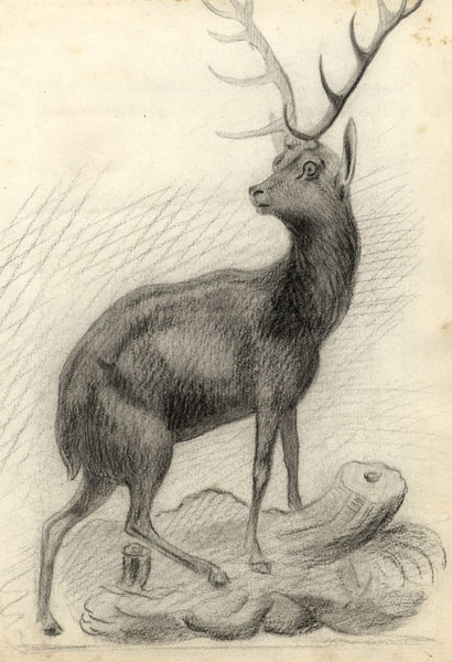 Monarch of the Glen Deer Stag after Landseer -Late 19th-century charcoal drawing