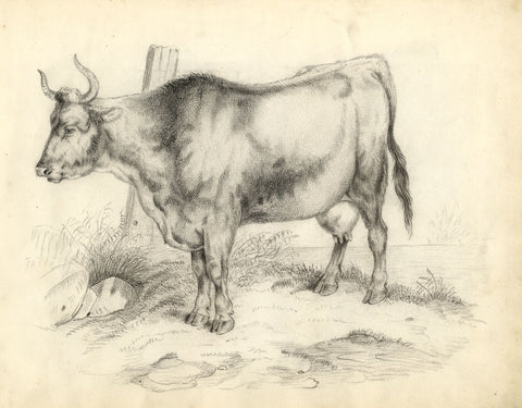 Bull in Pasture - Original late 19th-century charcoal drawing