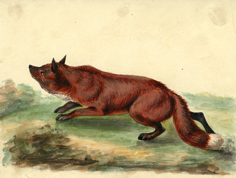 Arthur Prichard Harrison, Crouching Fox - Original 19th-century watercolour