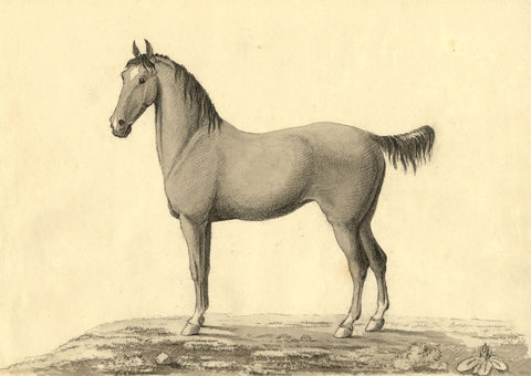 G. Du Rias, Study of a Horse - Original 1804 watercolour painting