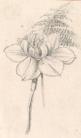 Thomas J. Marple, Blooming Flower Stalk - Original 19th-century graphite drawing
