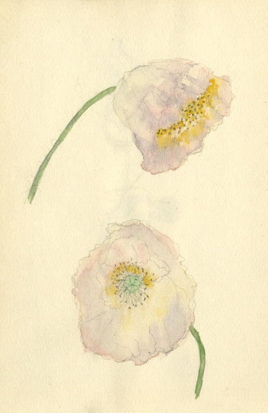 Pickford Robert Waller, Pale Pink Poppy Flowers - 1897 watercolour painting