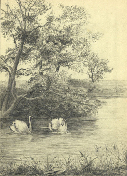 Amy Platts, Swans Floating in River Landscape - Original 1907 graphite drawing