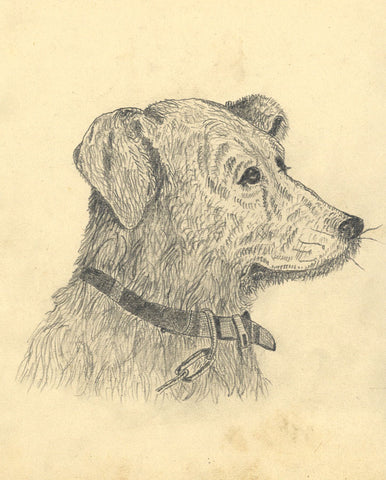 J.E. Jeffreys, Dog with Collar - Original late 19th-century graphite drawing