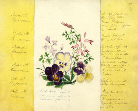 Helen Gifford, Violet and Pansy Flowers - Original mid-19th-century watercolour