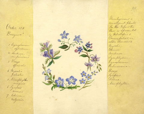 Helen Gifford, Borage Flowers - Original mid-19th-century watercolour painting