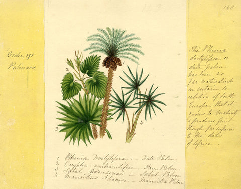 Helen Gifford, Palm Trees - Original mid-19th-century watercolour painting