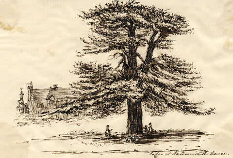 Cedar Tree at Hammersmith House, London - Original 1813 pen & ink drawing