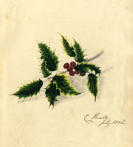C. Riall, Holly Berry Sprig - Original 1824 watercolour painting