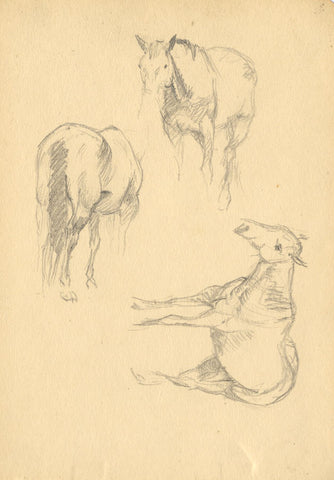 Horse Animal Studies - Original late 19th-century graphite drawing