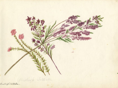 Purple Hyacinth & Lavender Flowers - Early 19th-century watercolour painting