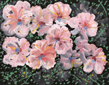 Gustave Bourgogne, Light Pink Flowers - Original mid-20th-century gouache painting