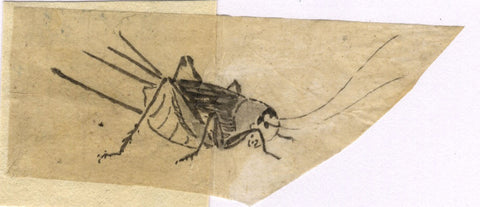 Cricket Insect Study - Original 19th-century pen & ink drawing
