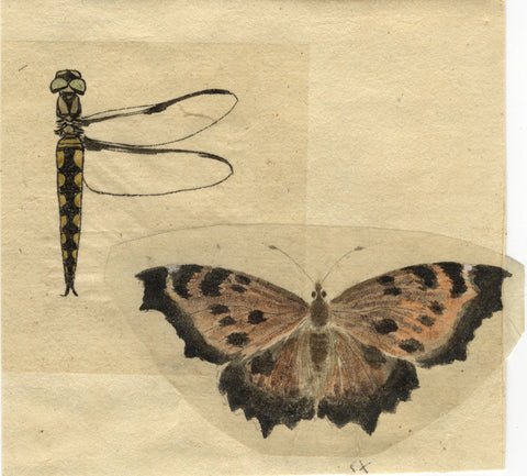 Butterfly & Dragonfly Study - Original 19th-century watercolour painting