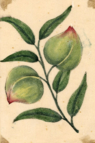 Mango Fruit Pith Painting - Original early 19th-century watercolour painting