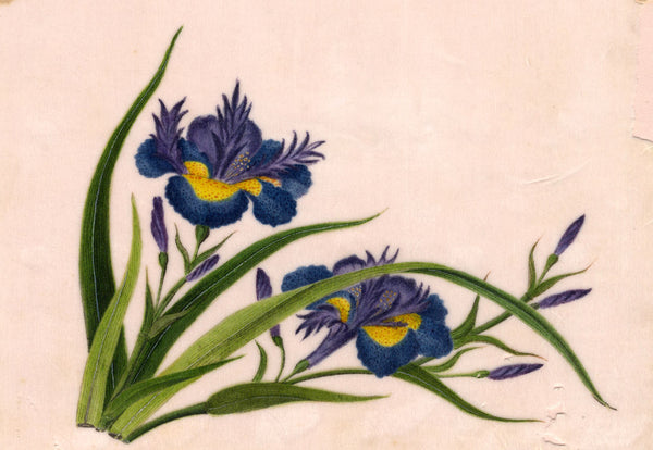 Chinese Irises Pith Painting - Original early 19th-century watercolour painting