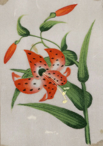 Red Lily Flower Pith Painting - Original early 19th-century watercolour painting