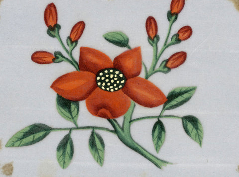 Orange Flower Pith Painting - Original early 19th-century watercolour painting