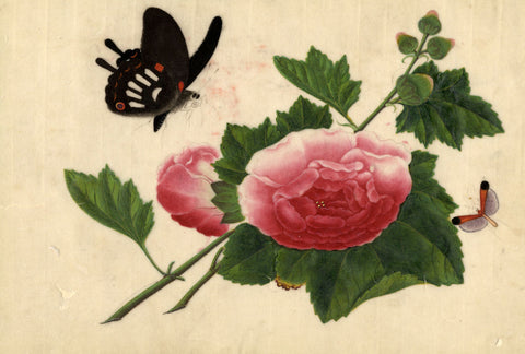 Peony and Butterfly Pith Painting - Original early 19th-century watercolour