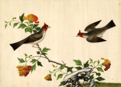 Two Birds Pith Painting - Original early 19th-century watercolour painting