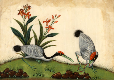 Cranes Pith Painting - Original early 19th-century watercolour painting