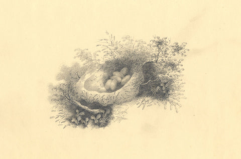Bird's Nest with Eggs - Original early 19th-century graphite drawing