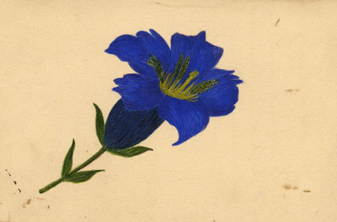 E. Wilson, Delphinium Flower - Original early 19th-century watercolour painting
