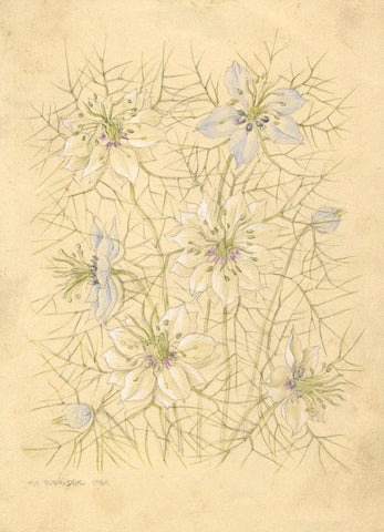 Mildred Eldridge RWS, Nigella Flowers - Original mid-20th-century watercolour
