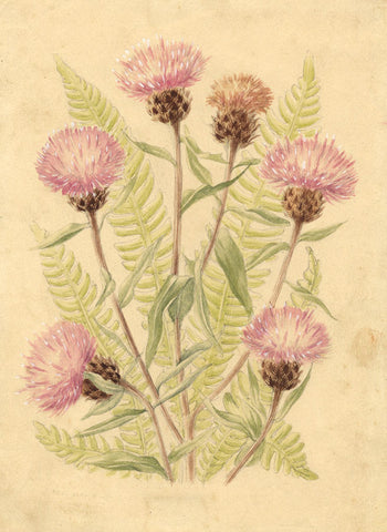 Mildred Eldridge RWS, Thistle Flowers - Original mid-20th-century watercolour