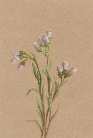 Helen C. Waterhouse, Thistle Flower Bunch - Original 1882 watercolour painting