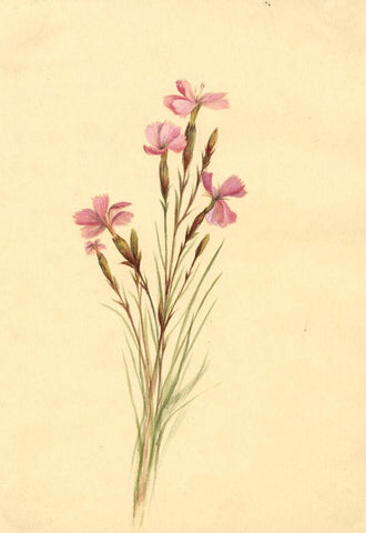 Helen C. Waterhouse, Woodland Pink Flowers - Original 1882 watercolour painting