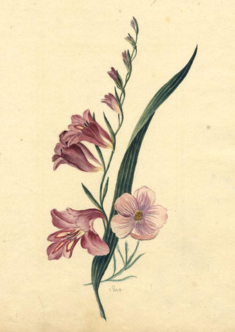 Anna Knowles, Purple Flowering Branch - Early 19th-century watercolour painting